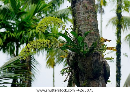 Wild tropical flower growing on the tree trunk saipan botanical garden mariana islands stock - Flowers that grow on tree trunks ...