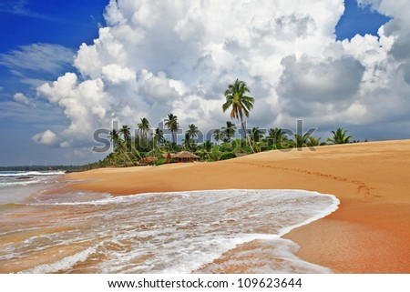 wild tropics - beautiful deserted beaches in Sri lanka