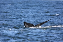 wild whale fin tale cape town south africa
