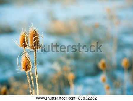 Wild Winter Weed