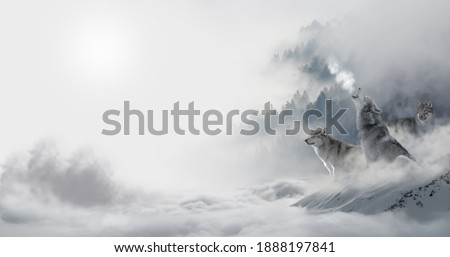 Wild wolfs in nature wilderness