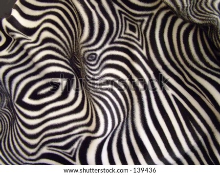 Wild Zebra print on fabric