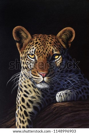 wildcat leopard in blackbackground / protrait wildcat leopard photography  - Shutterstock ID 1148996903