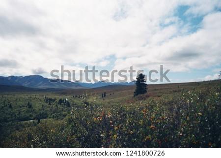 Wilderness in Alaska #1241800726