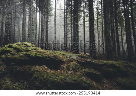 wilderness landscape forest...
