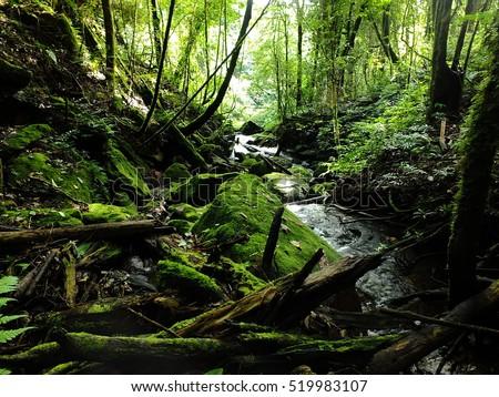 Wilderness Stream #519983107