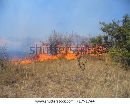 Wildfire in savanna (South Africa)