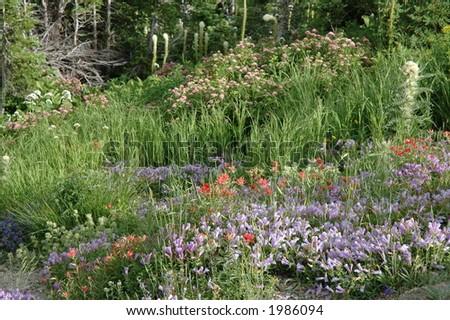 Wildflower field in Glacier National Park