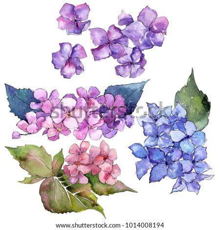 wildflower hydrangea flower in...