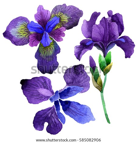 Shutterstock Wildflower iris flower in a watercolor style isolated. Full name of the plant: purple iris. Aquarelle wild flower for background, texture, wrapper pattern, frame or border.