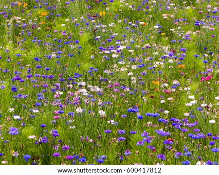 Wildflower meadow in the South of France Europe