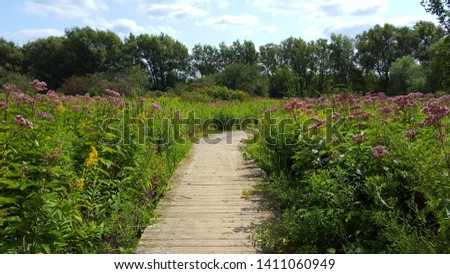wildflower pathway in Wildwood Conservation Area Ontario, Canada Stock photo ©
