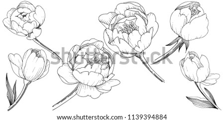 Wildflower peony in a style isolated. Full name of the plant: peony. flower for background, texture, wrapper pattern, frame or border.