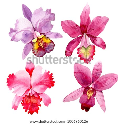 Wildflower pink orchid flower in a watercolor style isolated. Full name of the plant: pink orchid. Aquarelle wild flower for background, texture, wrapper pattern, frame or border.