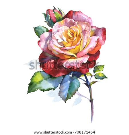 Shutterstock Wildflower rose flower in a watercolor style isolated. Full name of the plant: rosa. Aquarelle wild flower for background, texture, wrapper pattern, frame or border.