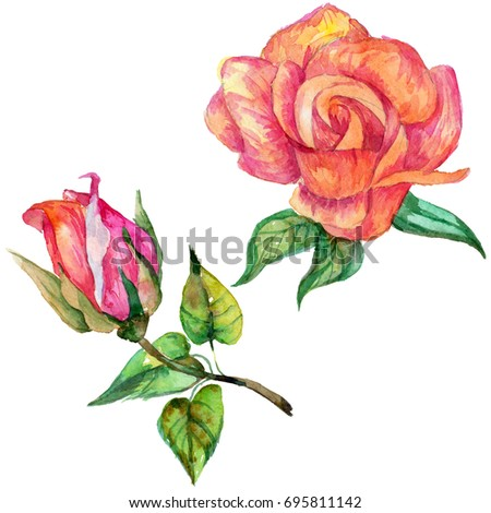 Wildflower Rose Flower In A Watercolor Style Isolated Full Name Of