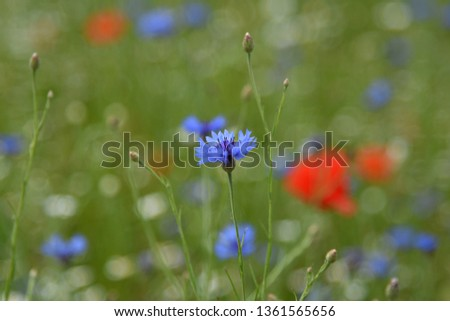 wildflower summer meadow #1361565656
