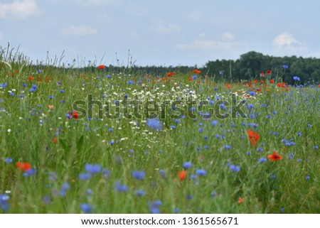wildflower summer meadow #1361565671