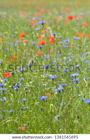 wildflower summer meadow #1361565695