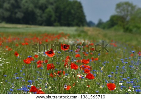 wildflower summer meadow #1361565710
