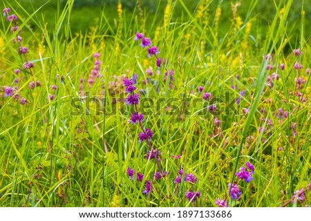 Wildflowers among tall green grass, summer background stock photo