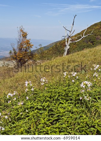 Wildflowers and a bare tree frame this beautiful mountain scene in Shenandoah National Park in West Virginia.