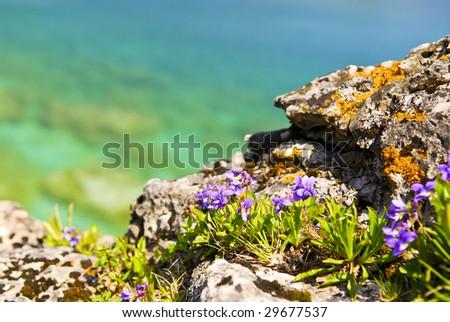 Wildflowers and rocks at shore of Georgian Bay Ontario Canada