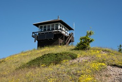 Wildflowers Below Huckleberry Lookout Tower in Montana mountains of Glacier National Park