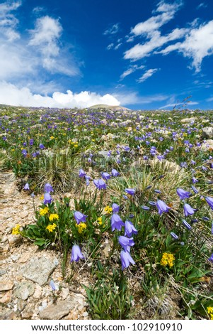 Wildflowers blooming in the Colorado Rocky Mountain Summertime