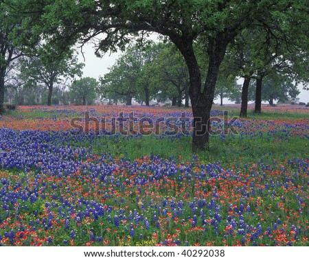 bluebonnet clip art. with Texas luebonnets and