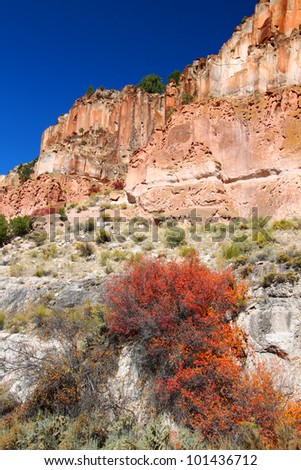 Wildflowers grow beneath steep cliffs at Fremont Indian State Park of Utah