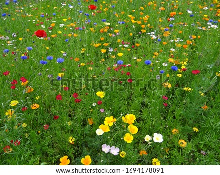 wildflowers in summer meadow british meadow stock photo