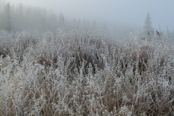 Wildflowers killed by frost in a meadow in autumn in rural New Brunswick, Canada