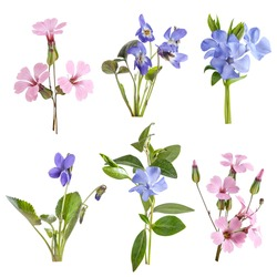 Wildflowers set isolated on white background