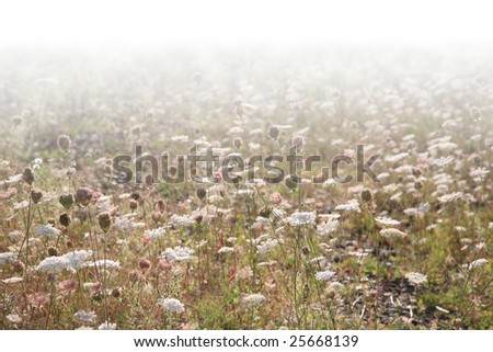 Wildland background with backlighted grass