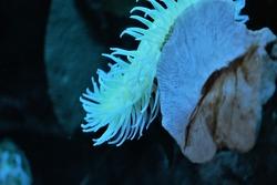 wildlife and marinelife animals photography