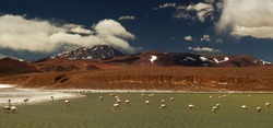 Wildlife. Birdwatching. Panorama view of a Flamingos colony in Lake Laguna Brava in the Andes mountains, La Rioja, Argentina