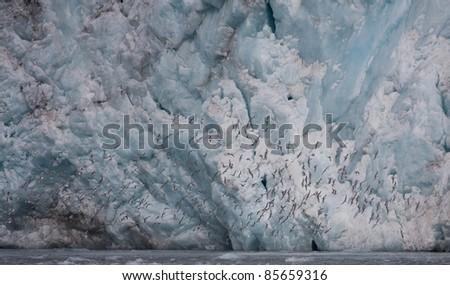 Wildlife Cruise around Resurrection Bay and  Holgate Glacier from Seward Alaska USA