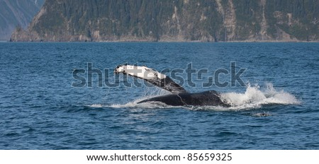 Wildlife Cruise around Resurrection Bay and  Holgate Glacier from Seward Alaska USA - stock photo