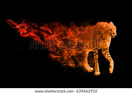 wildlife image of the world fasted land animal the cheetah, animal kingdom big cats of africa #639662932