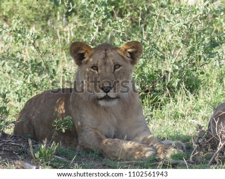 Wildlife images from the Serengeti and Ngorongoro Crater #1102561943
