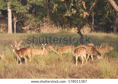 wildlife in Kan ha National Park  , India . #578011387