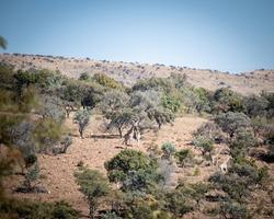 wildlife in the bush veld