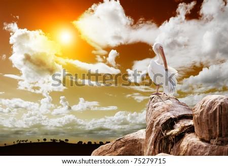 wildlife.Landscape and pelican