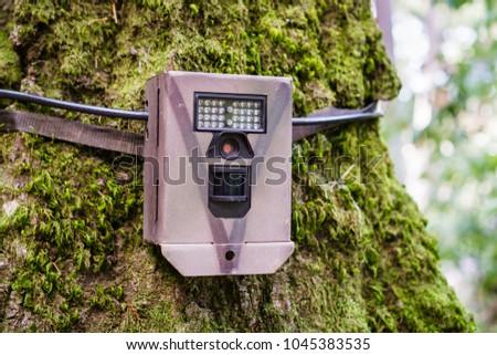 Wildlife monitoring device strapped on the base of a tree trunk, Santa Cruz mountains, San Francisco bay area, California