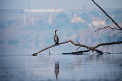 Wildlife morning landscape with river and great black cormorant bird on tree branch on industrial city background