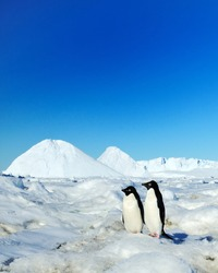 Wildlife of South Pole.