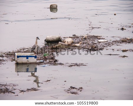 Wildlife On A Polluted River