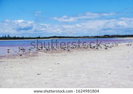 Wildlife on the shoreline of a lake