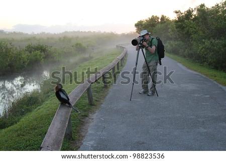 Wildlife Photographer Aiming Lens at an American Anhinga - Everglades National Park, Florida